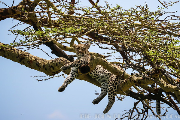 Serengeti National Park 2014