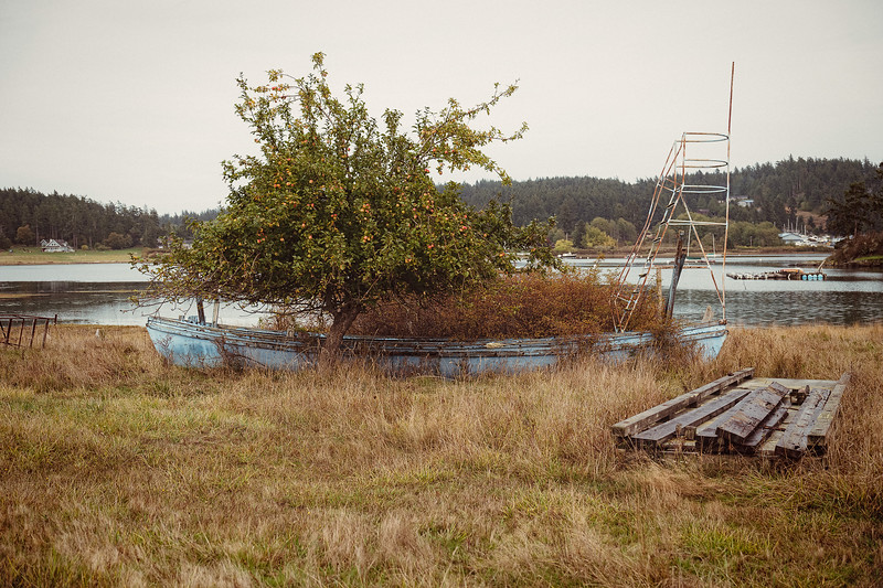 An old, blue boat once used for salmon fishing now catches falling apples in Otis Perkins Day Park.