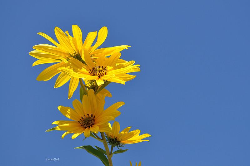 in the sun 10-21-2011.jpg