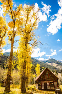 Fall Color in Crystal, CO