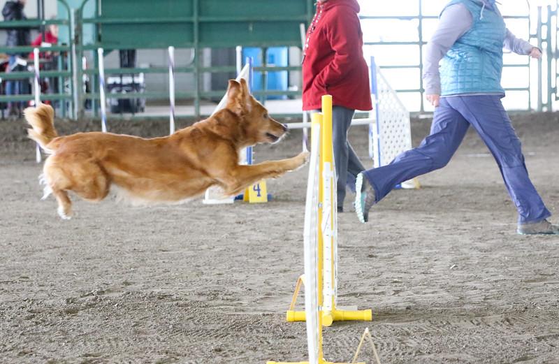 3-10-2019 Bloodhound-0981.jpg