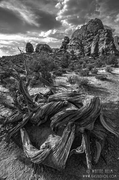 Test of Time - Black & White Photography by Wayne Heim