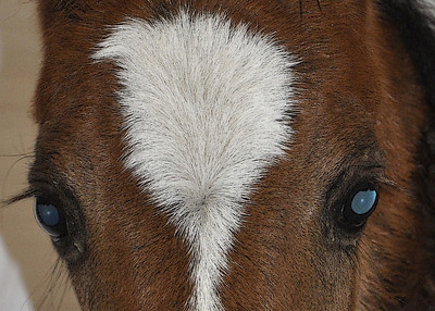 rescued nurse mare foals