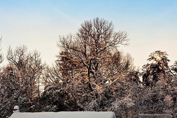 Snow February 2010