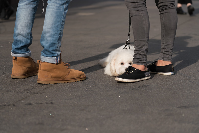 Dogs-39.jpg