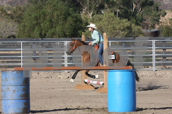 AHCA Buckle Series 2- Green Horse