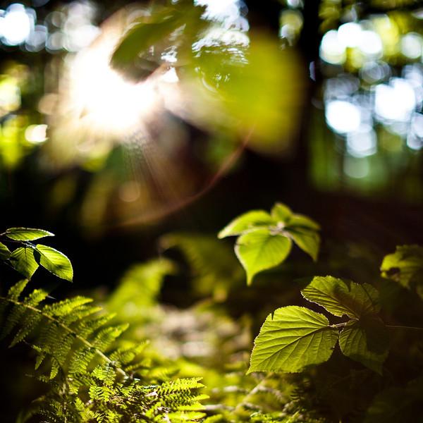 20090710-_MG_0444-Edit-2.jpg