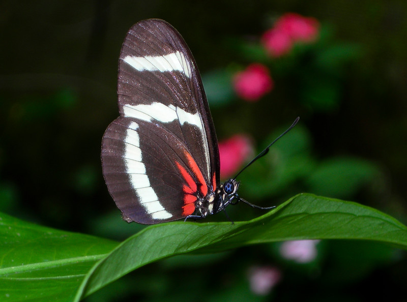 Costa Rica_Butterflies-8.jpg