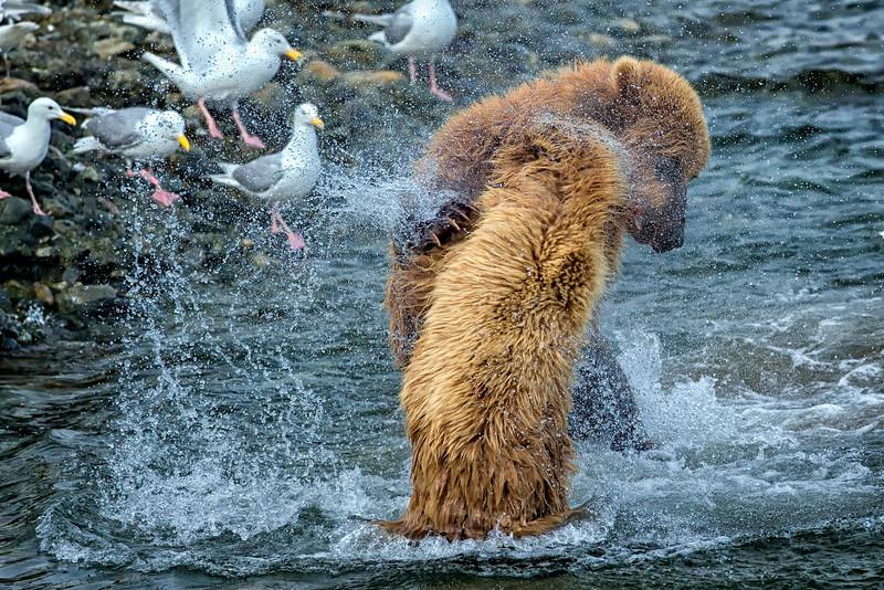 Alaska_2013_FH0T9654.jpg