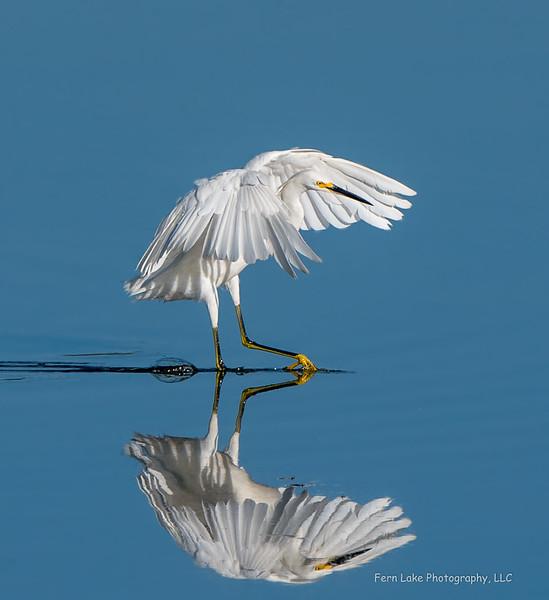 """""""Egret Ballet"""" - Image #D01_6632"""