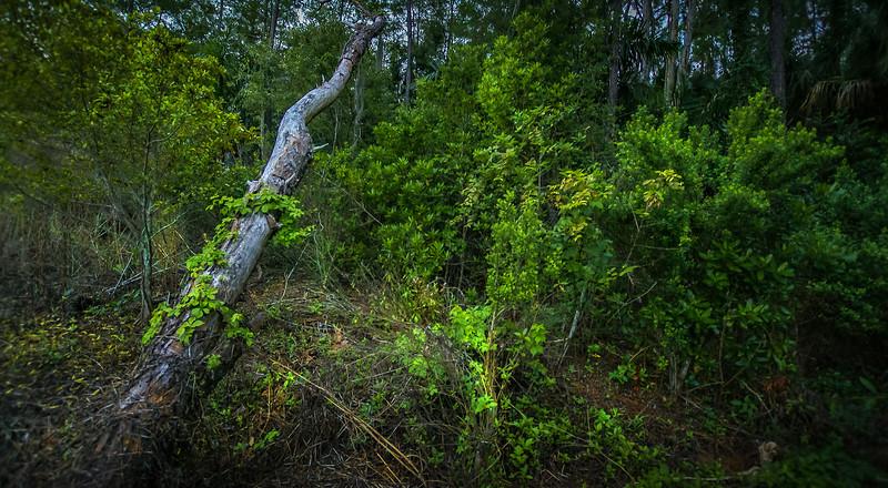 Forest Shadows-099.jpg