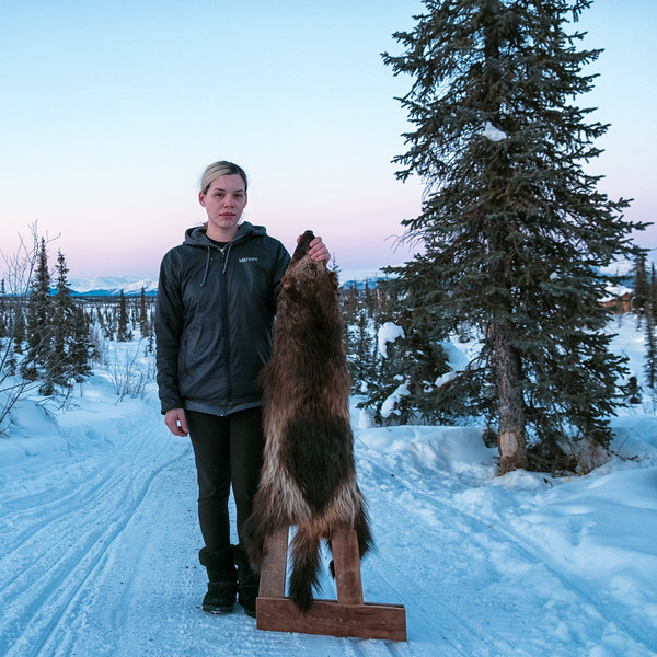 Young Gwich'in trapper, Brittany Hollandsworth of Arctic Village, poses with her prize wolverine pelt. Wolverine trapping and hunting by indigenous and non-indegenous people is popular throughout the North Slope and Brooks Range.