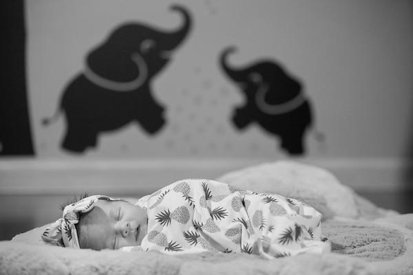 Charlee Wild Newborn Session