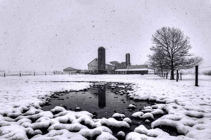 snow 2016 - puddle amish farm(p).jpg
