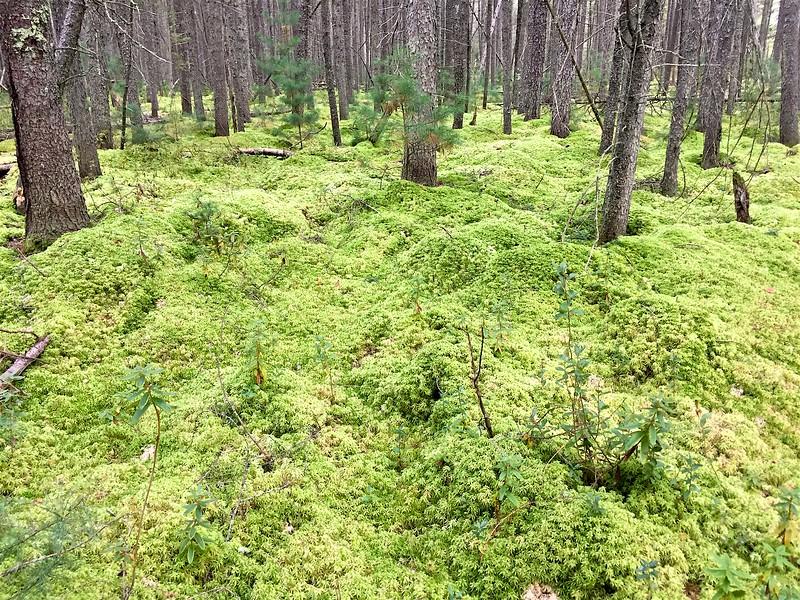Thick moss carpet.