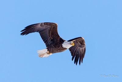 Boulder County Birds January 2016