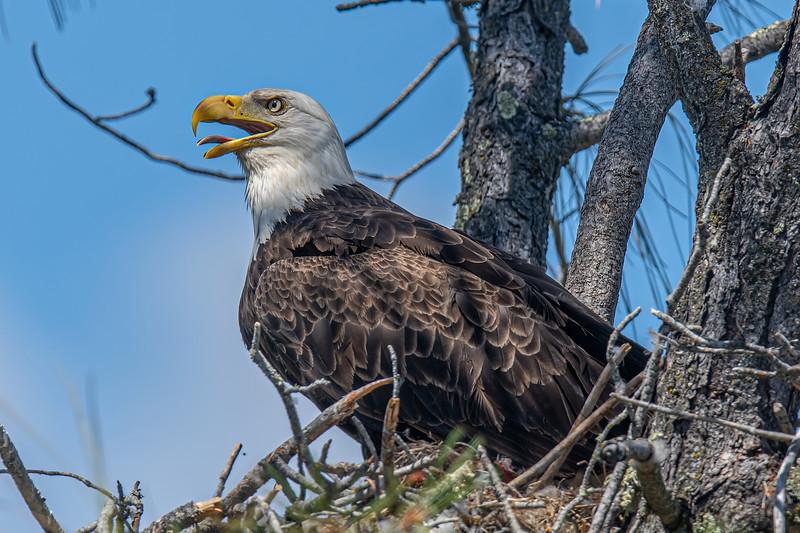 20190604Home Eagles 6-4-19DSC_4447.jpeg
