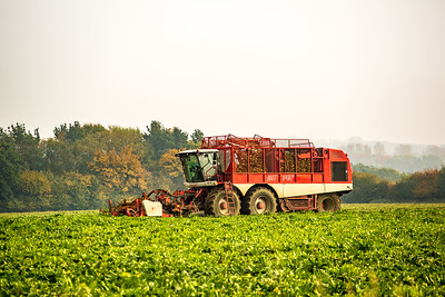 Sugar beet harvest and after