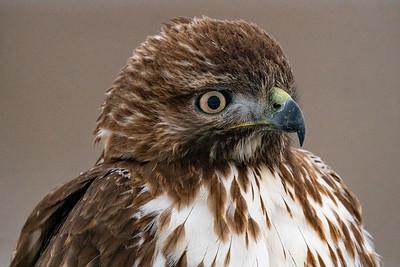 Lower Klamath Birds 2020