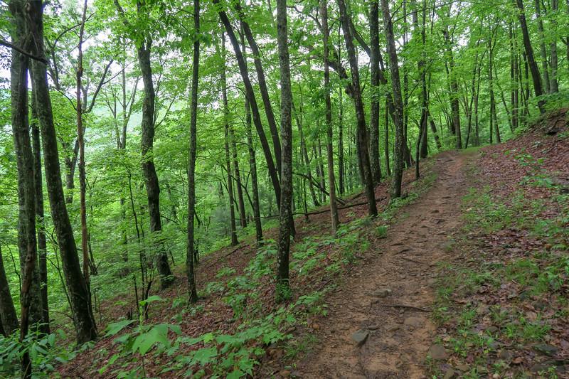 Lower Sidehill Trail -- 2,580'