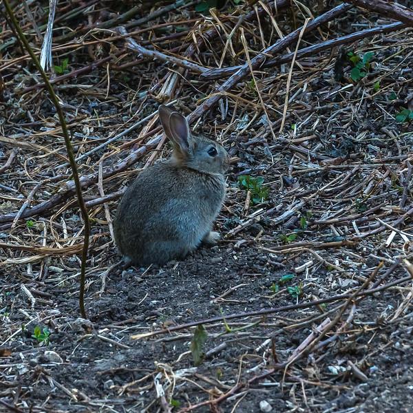 Bunny Rabbit Kit