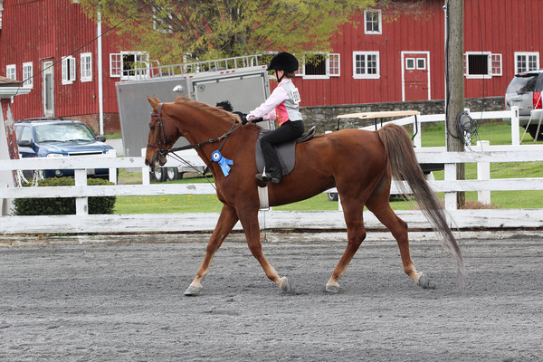 029 Academay Walk-Trot Equitation First Year Riders