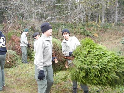 Christmas Tree Pickup - Dec 3