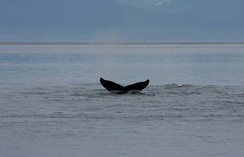 Alaska 2009 kayaking