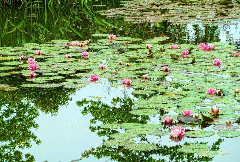 Monet LilyPads 1.jpg