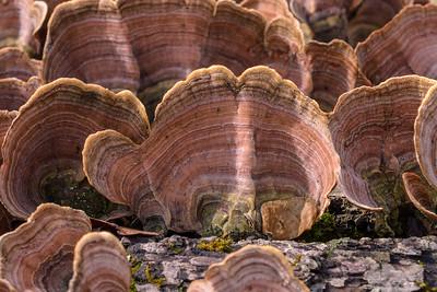 Winter Fungi