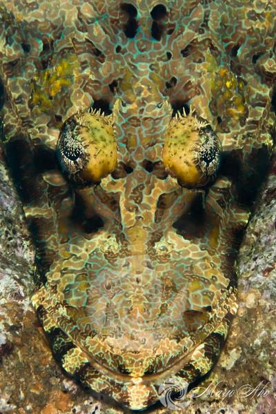 Milne Bay Underwater