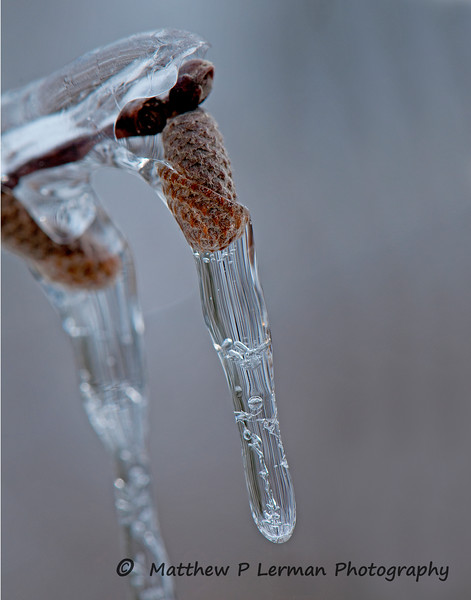 Winter's Icy Grip