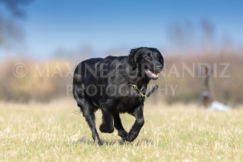 Dog Training Novice GD Feb2019-5785.jpg