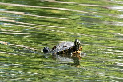 2018 Golden Gate Park - Gophers; Turtles; Ducks
