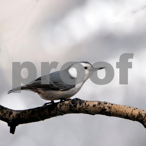 Tell bird 5 (2).jpg