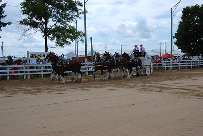 Registered 6 Horse Hitch