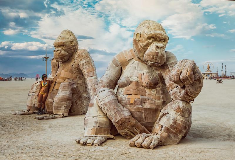 Dusty Gorillas.jpg