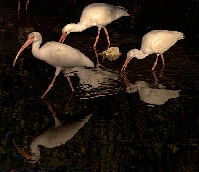 DSC_0212 3 birds sun-shade  tNEF PS- LL Florida +++++.jpg