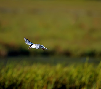 Palo Alto Birding