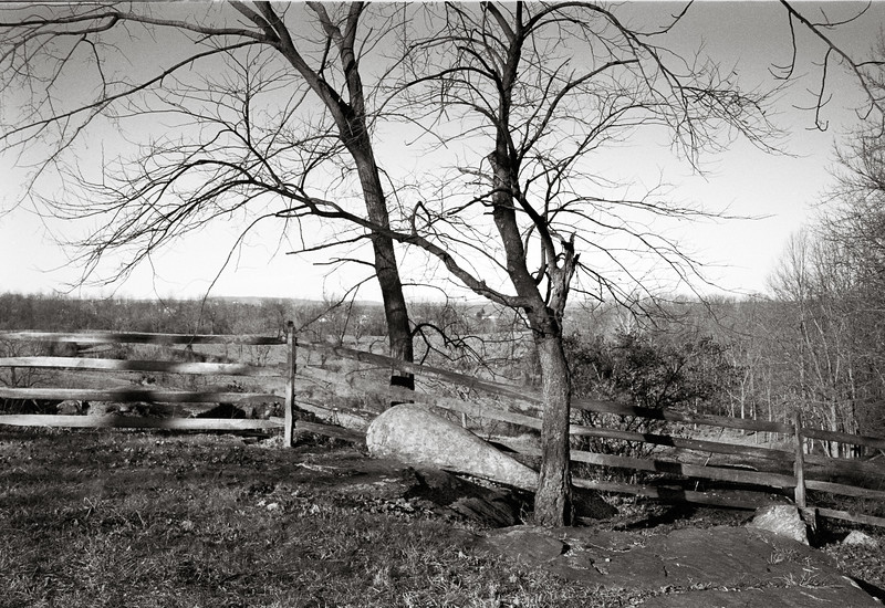 ©2020 Dennis A. Mook; All Rights Reserved; Tree Project--6.jpg