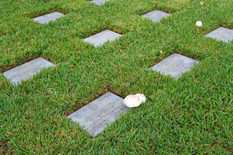 2018 Florida National Cemetery on Veterans Day (26).JPG