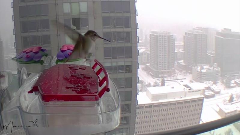 The Hummingbird Chronicles