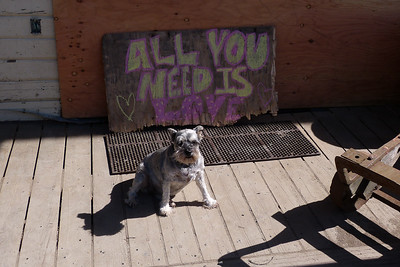 All You Need is Love - TT April 2014, Cynthia Meyer, Tenakee Springs, Alaska