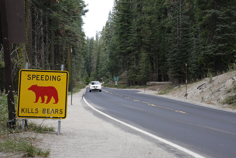 """""""Red Bear: Dead Bear."""" These signs along the road mark where bears have recently been killed by cars."""