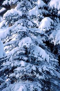 Winter_020