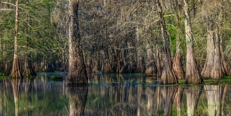 Lake Martin, La. T6i, 18-200 lens, 158A-small.jpg