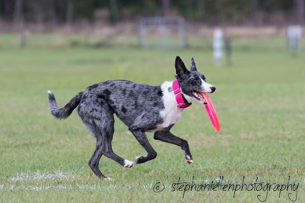 _MG_3185Up_dog_International_2016_StephaniellenPhotography.jpg
