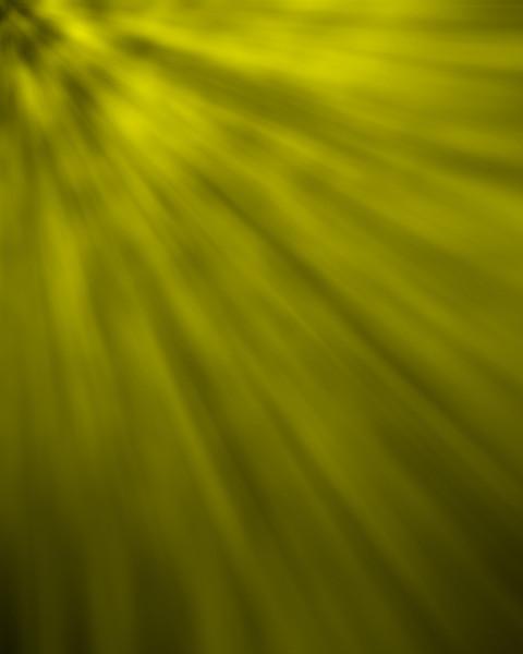 Rays Yellow.jpg