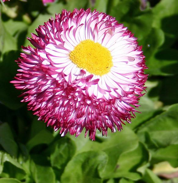 Botanic Gardens (May 2005)