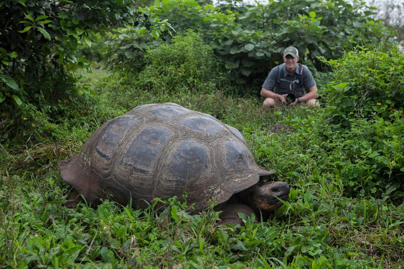 Giant tortoise  w Scott, Santa Cruz.jpg